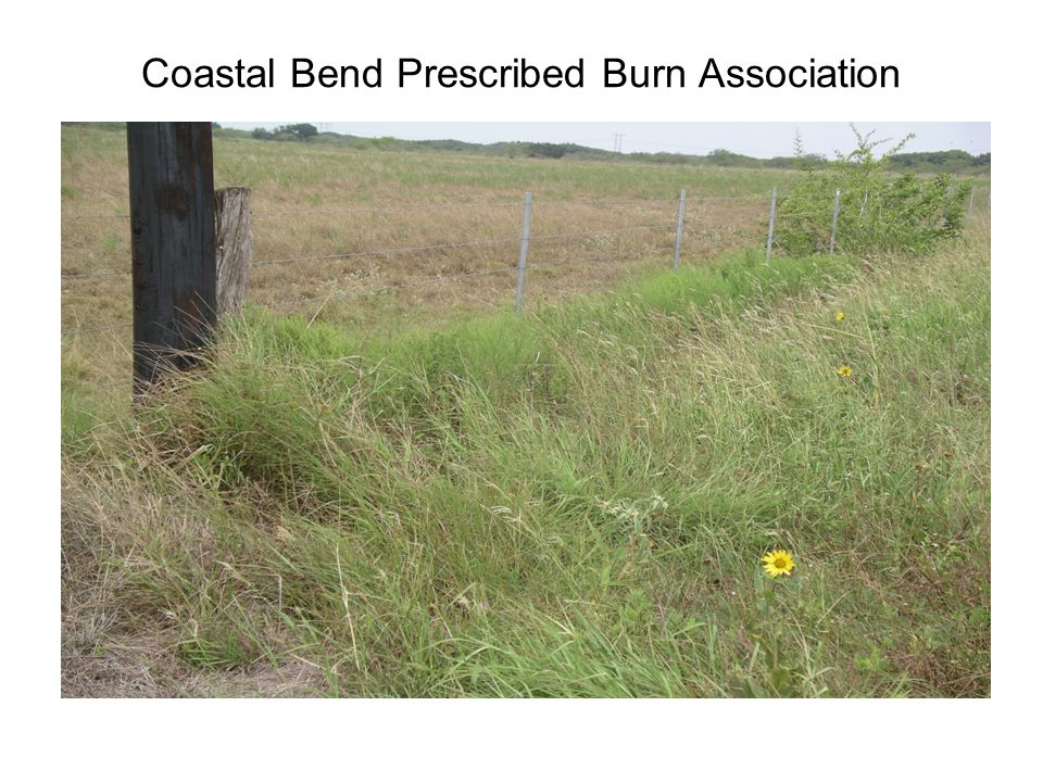 Coastal Bend Prescribed Burn Association