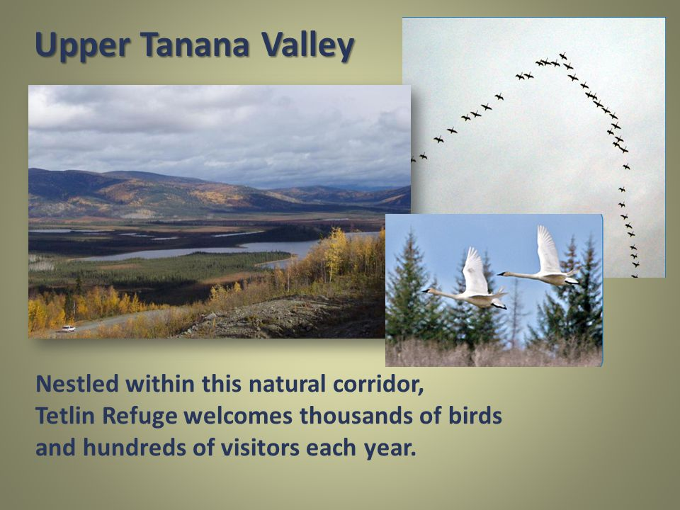 Nestled within this natural corridor, Tetlin Refuge welcomes thousands of birds and hundreds of visitors each year.