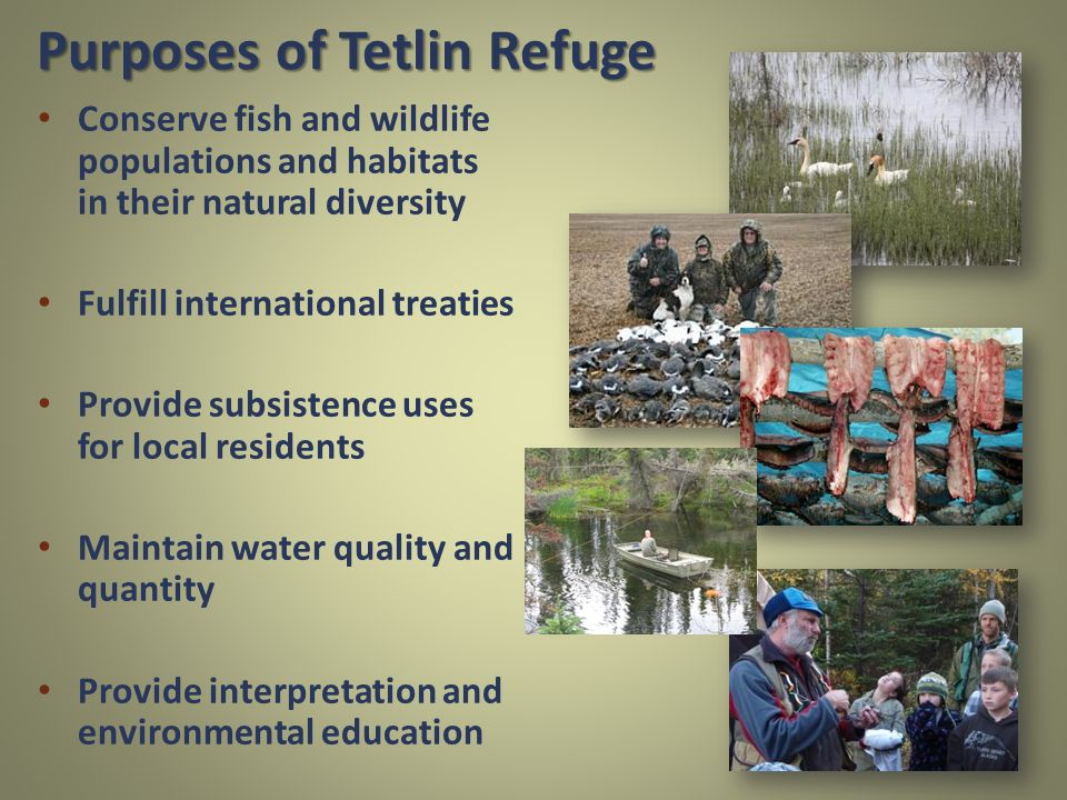 Purposes of Tetlin Refuge Conserve fish and wildlife populations and habitats in their natural diversity Fulfill international treaties Provide subsistence uses for local residents Maintain water quality and quantity Provide interpretation and environmental education