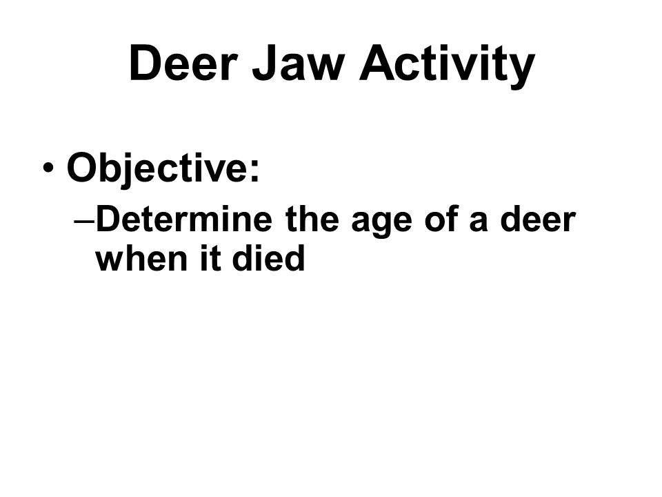 Deer Jaw Activity Objective: –Determine the age of a deer when it died