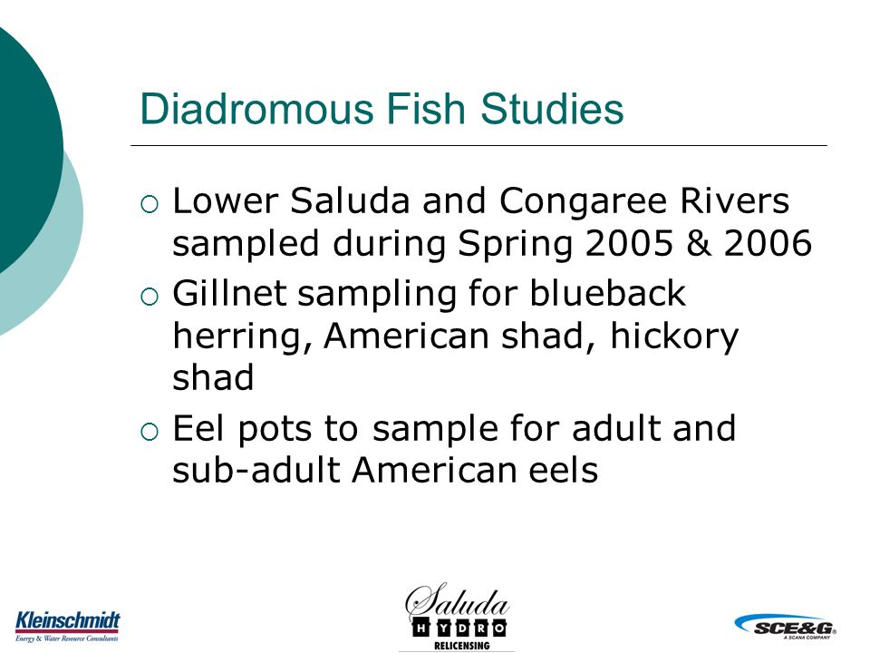 Diadromous Fish Studies  Lower Saluda and Congaree Rivers sampled during Spring 2005 & 2006  Gillnet sampling for blueback herring, American shad, hickory shad  Eel pots to sample for adult and sub-adult American eels