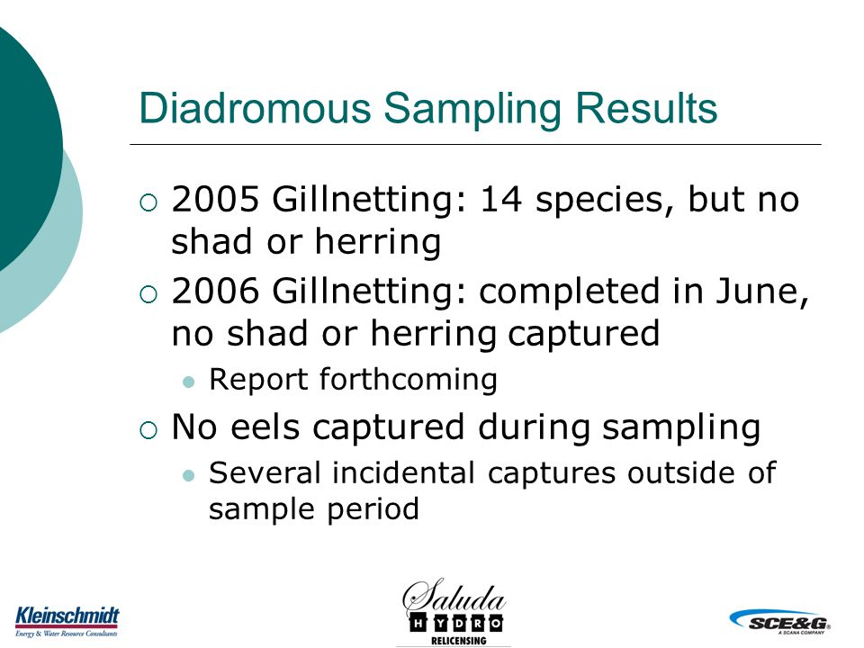 Diadromous Sampling Results  2005 Gillnetting: 14 species, but no shad or herring  2006 Gillnetting: completed in June, no shad or herring captured Report forthcoming  No eels captured during sampling Several incidental captures outside of sample period