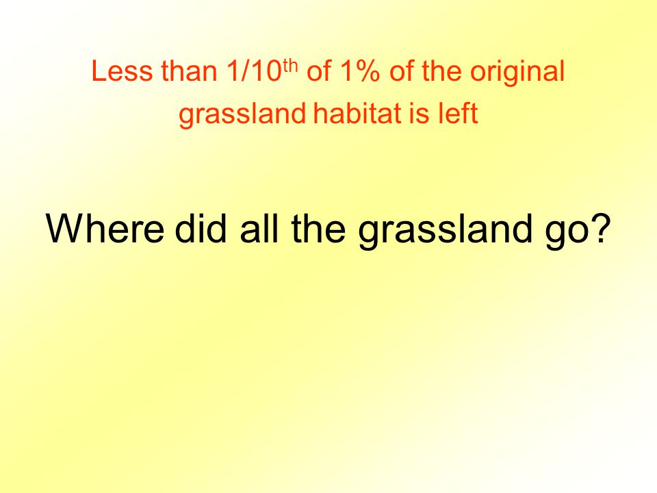 Where did all the grassland go Less than 1/10 th of 1% of the original grassland habitat is left