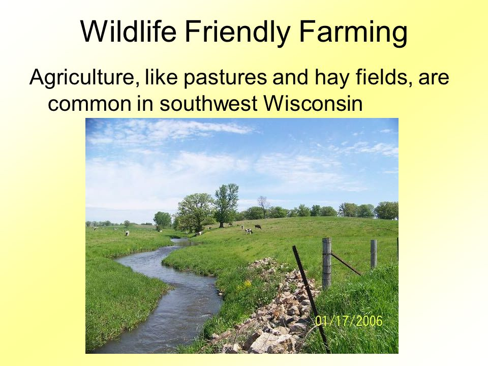 Wildlife Friendly Farming Agriculture, like pastures and hay fields, are common in southwest Wisconsin