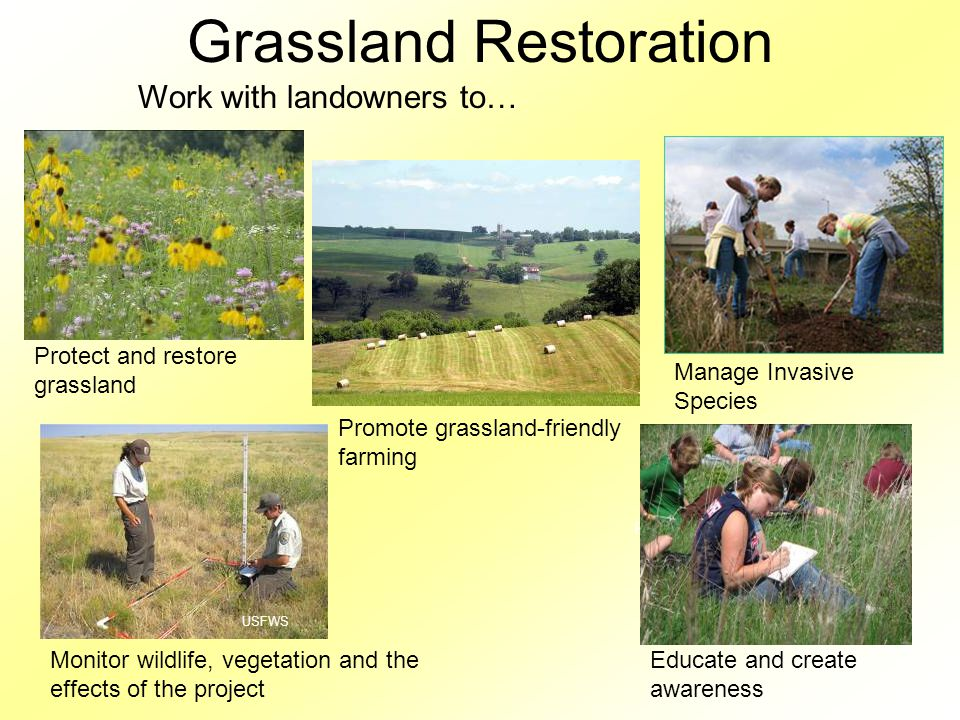 Grassland Restoration Work with landowners to… Monitor wildlife, vegetation and the effects of the project USFWS Manage Invasive Species Promote grassland-friendly farming Educate and create awareness Protect and restore grassland Photo C.