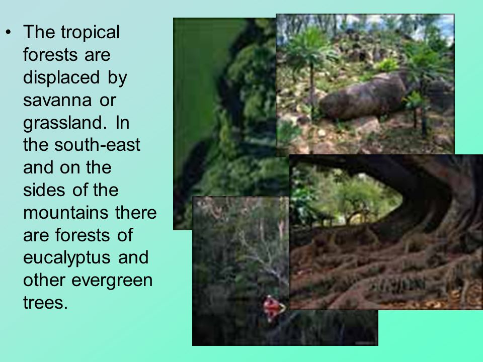 The tropical forests are displaced by savanna or grassland.