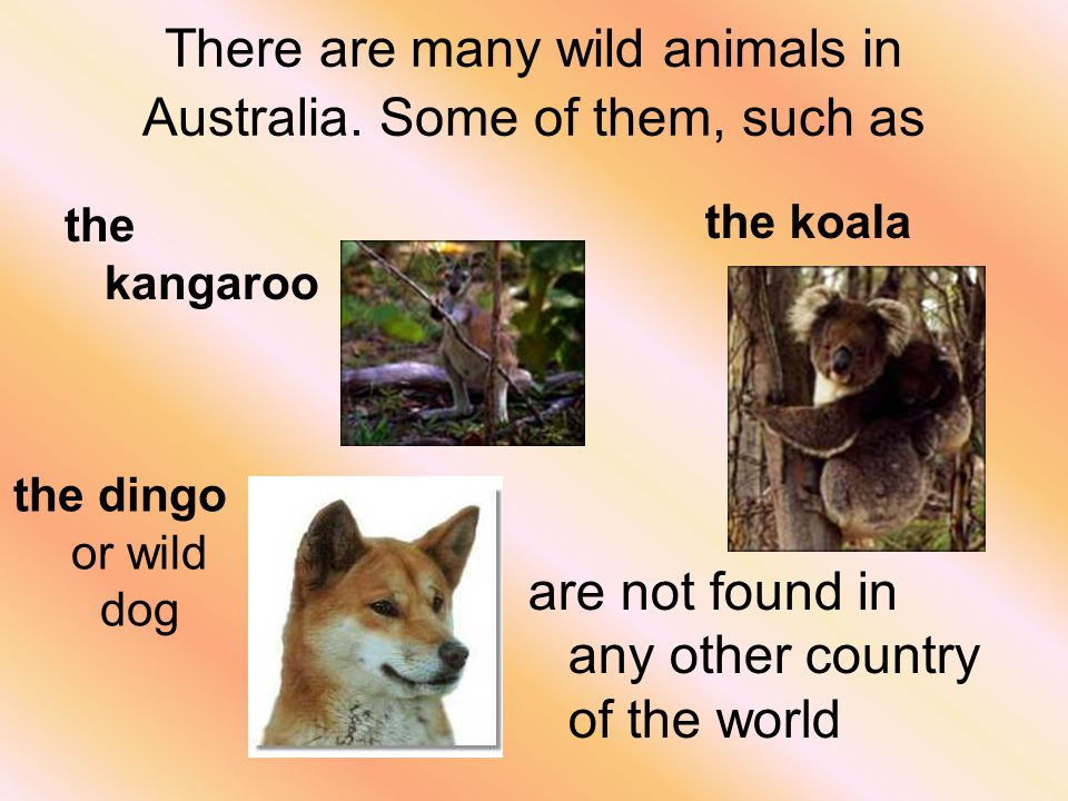 There are many wild animals in Australia.