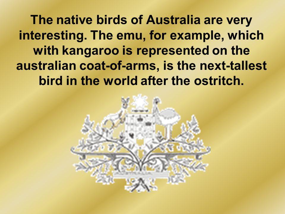The native birds of Australia are very interesting.