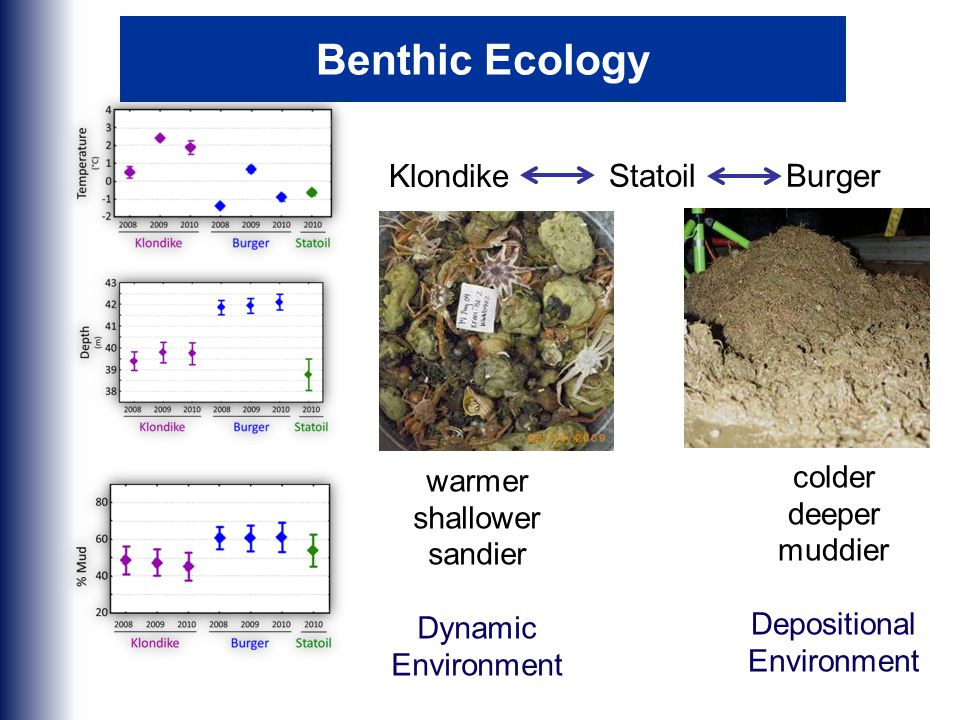 Benthic Ecology Klondike StatoilBurger warmer shallower sandier Dynamic Environment colder deeper muddier Depositional Environment