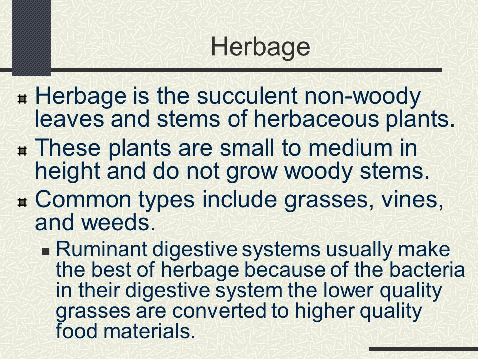 Herbage Herbage is the succulent non-woody leaves and stems of herbaceous plants. These plants are small to medium in height and do not grow woody ste