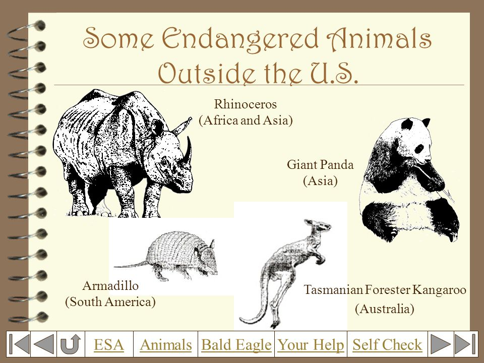 Some Endangered Animals Outside the U.S.