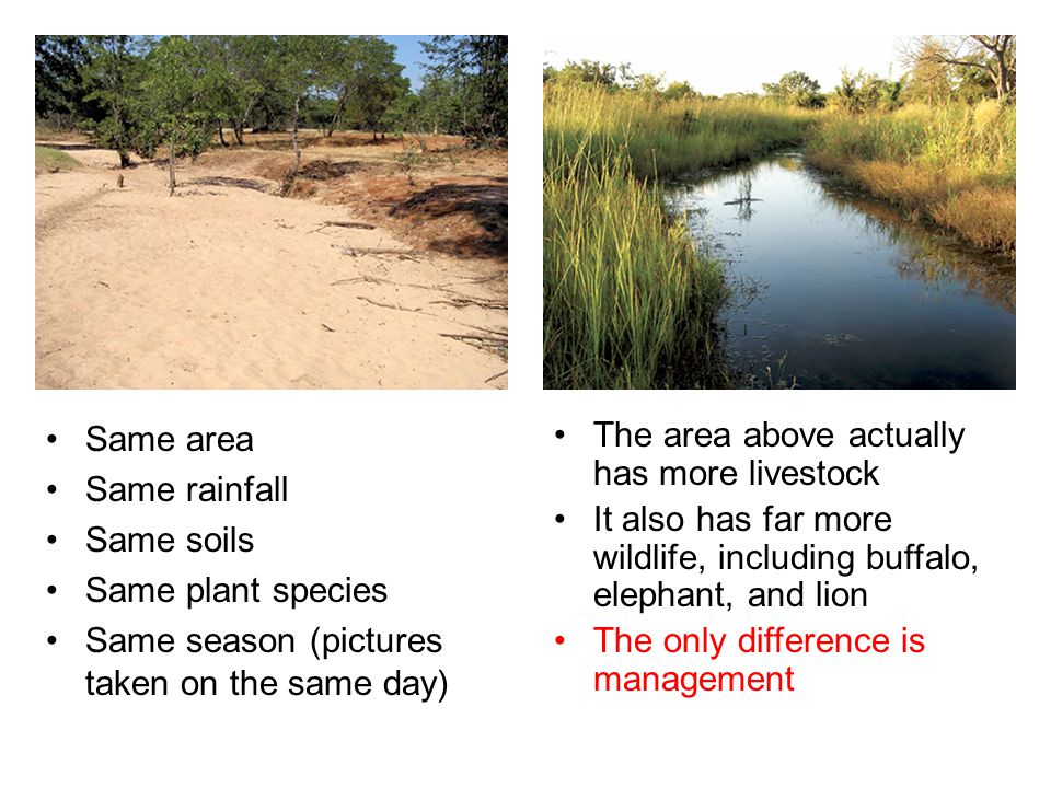 Same area Same rainfall Same soils Same plant species Same season (pictures taken on the same day) The area above actually has more livestock It also has far more wildlife, including buffalo, elephant, and lion The only difference is management
