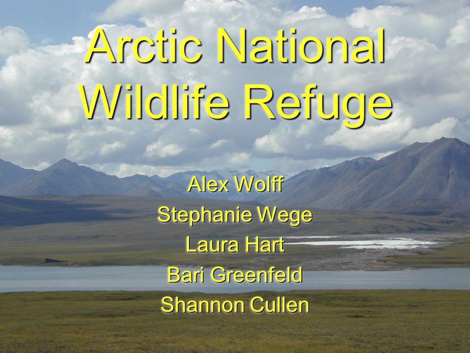 Arctic National Wildlife Refuge Alex Wolff Stephanie Wege Laura Hart Bari Greenfeld Shannon Cullen Alex Wolff Stephanie Wege Laura Hart Bari Greenfeld