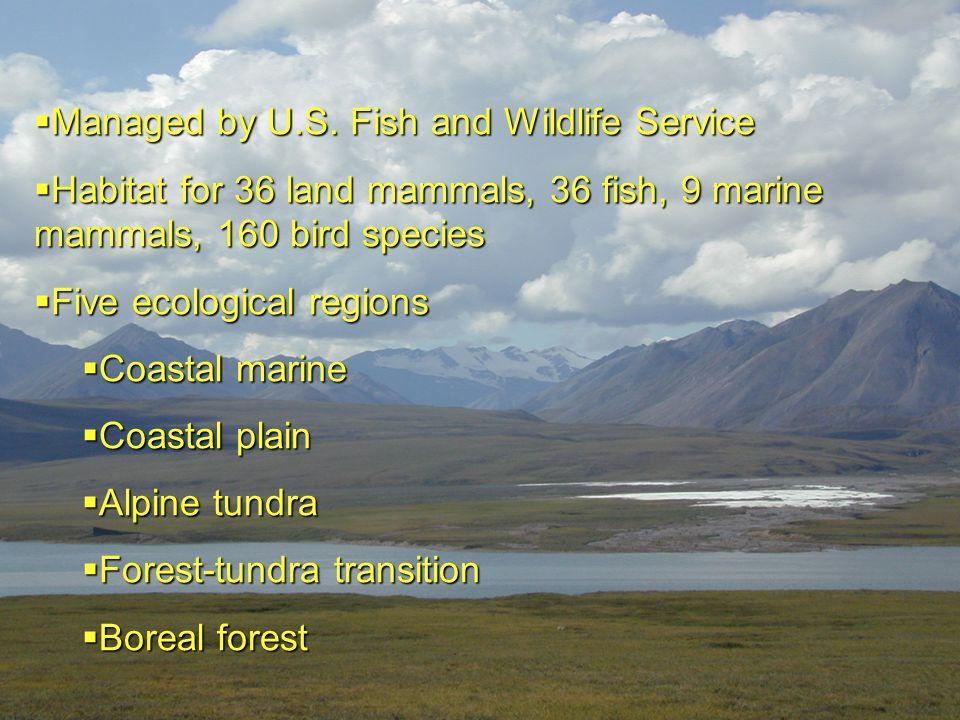  Managed by U.S. Fish and Wildlife Service  Habitat for 36 land mammals, 36 fish, 9 marine mammals, 160 bird species  Five ecological regions  Coa