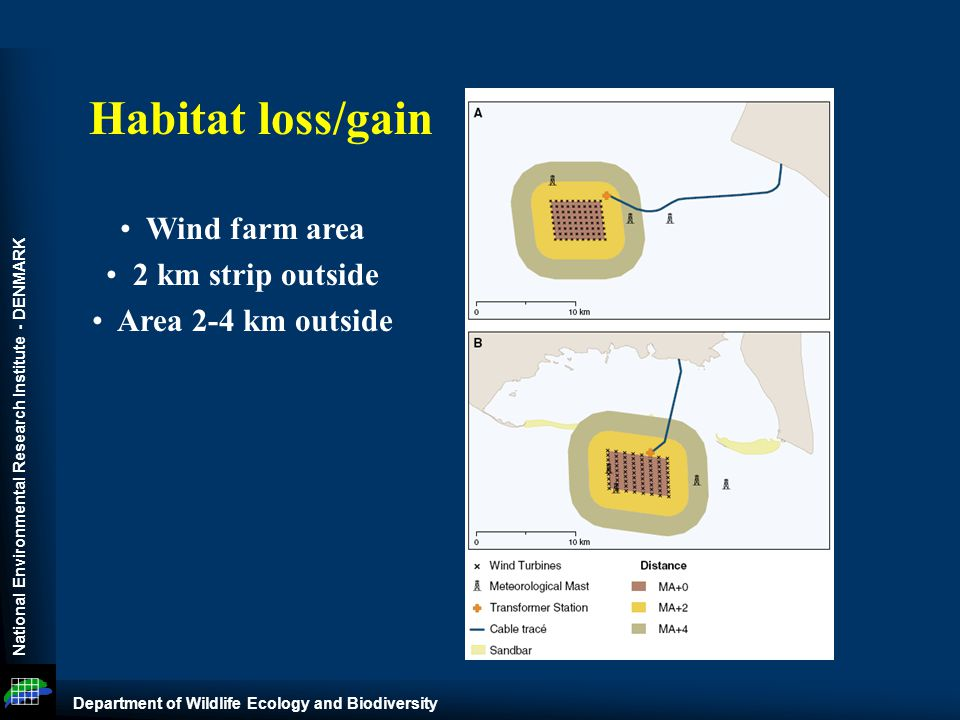 National Environmental Research Institute - DENMARK Department of Wildlife Ecology and Biodiversity Wind farm area 2 km strip outside Area 2-4 km outside Habitat loss/gain