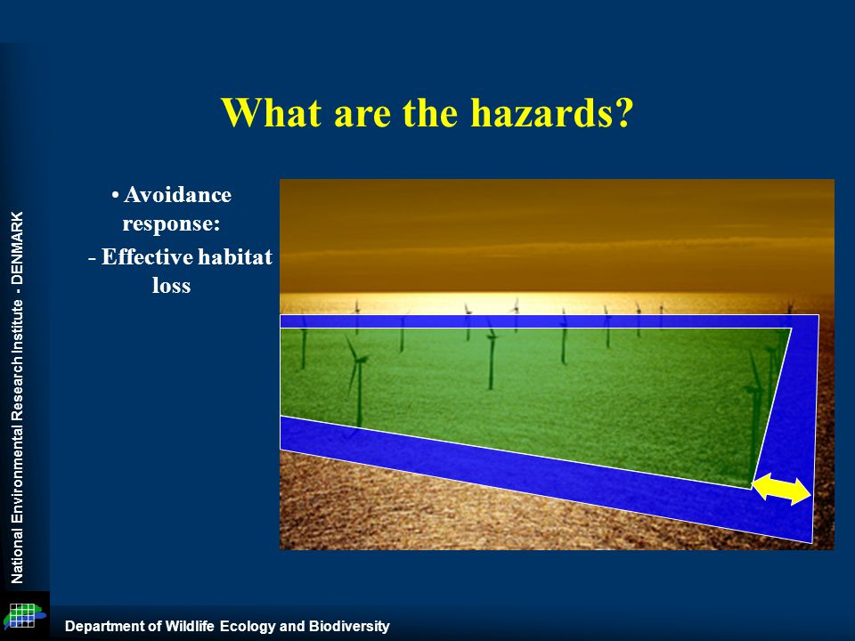 National Environmental Research Institute - DENMARK Department of Wildlife Ecology and Biodiversity What are the hazards.