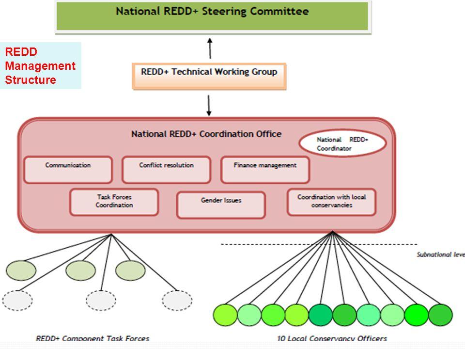 REDD Management Structure
