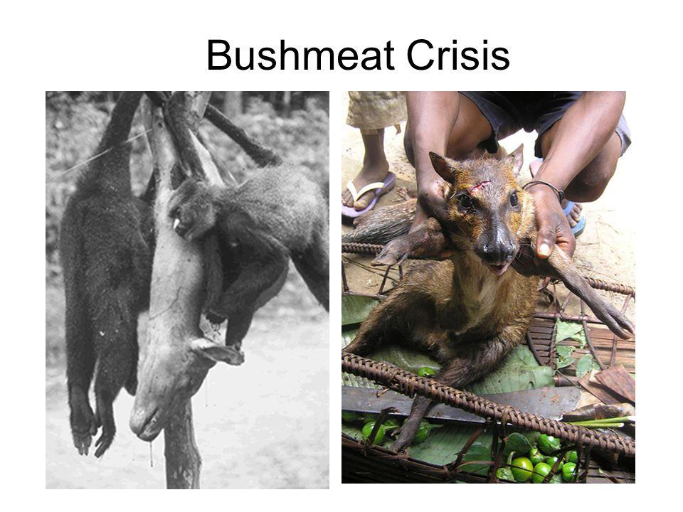 Bushmeat Crisis