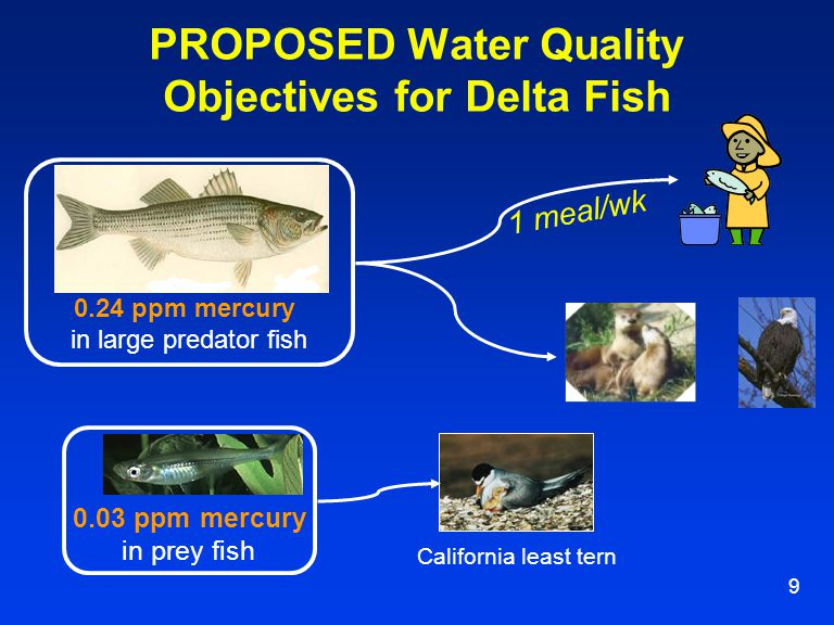 9 PROPOSED Water Quality Objectives for Delta Fish 0.24 ppm mercury in large predator fish 0.03 ppm mercury in prey fish California least tern 1 meal/