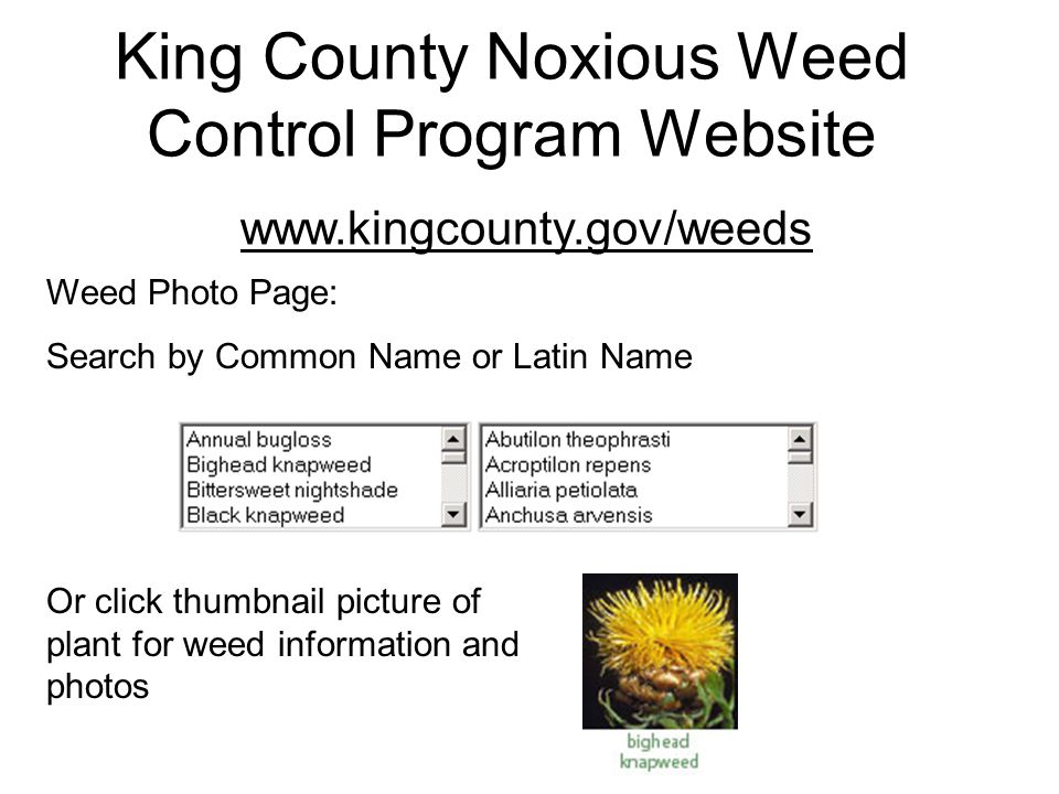 King County Noxious Weed Control Program Website www.kingcounty.gov/weeds Weed Photo Page: Search by Common Name or Latin Name Or click thumbnail picture of plant for weed information and photos