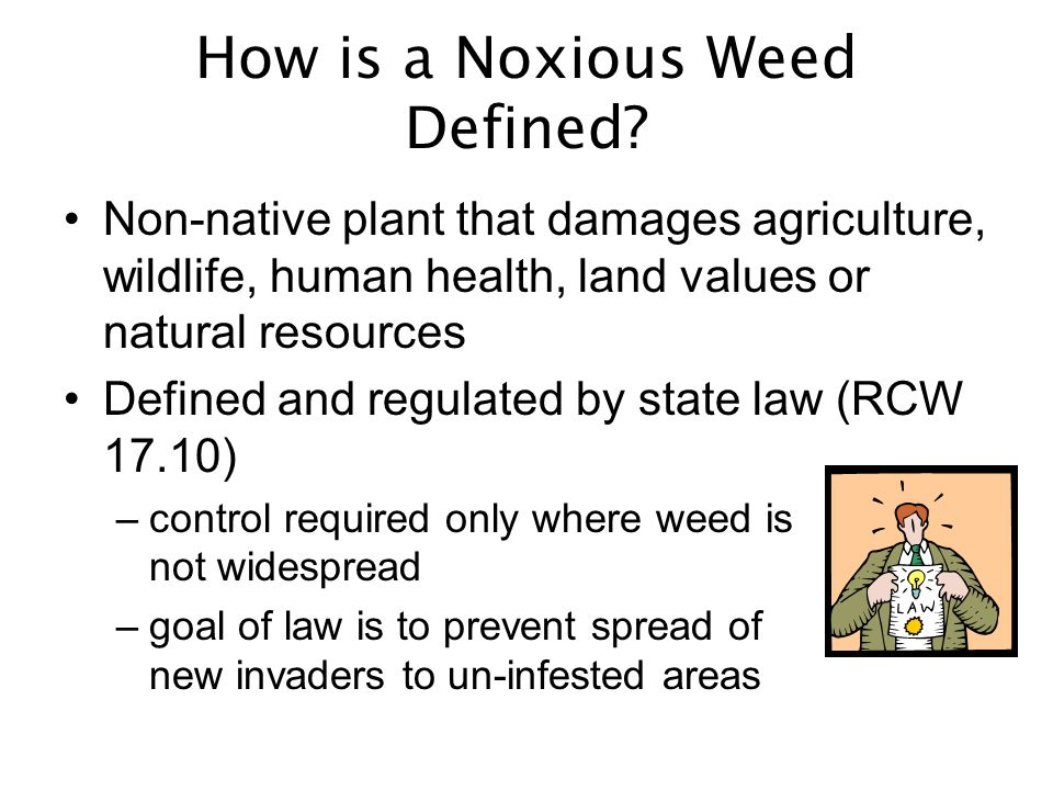 How is a Noxious Weed Defined.