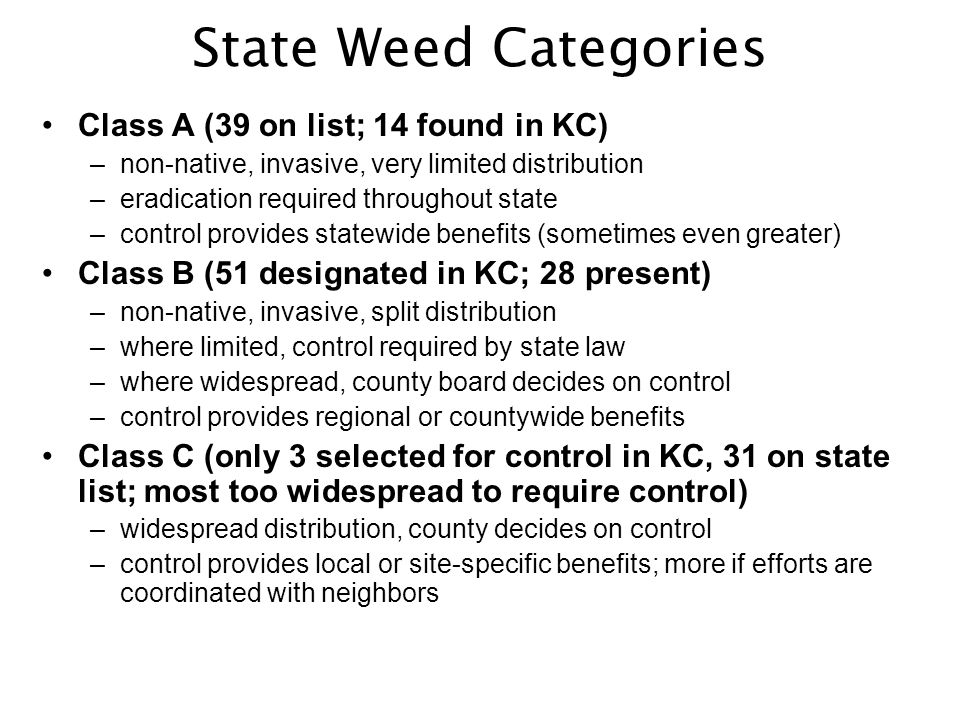 State Weed Categories Class A (39 on list; 14 found in KC) –non-native, invasive, very limited distribution –eradication required throughout state –control provides statewide benefits (sometimes even greater) Class B (51 designated in KC; 28 present) –non-native, invasive, split distribution –where limited, control required by state law –where widespread, county board decides on control –control provides regional or countywide benefits Class C (only 3 selected for control in KC, 31 on state list; most too widespread to require control) –widespread distribution, county decides on control –control provides local or site-specific benefits; more if efforts are coordinated with neighbors
