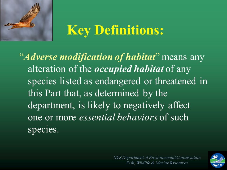 NYS Department of Environmental Conservation Fish, Wildlife & Marine Resources Key Definitions: Occupied habitat means the geographic are in New York within which a species listed as endangered or threatened in this Part has been determined by the department to exhibit one or more essential behaviors.