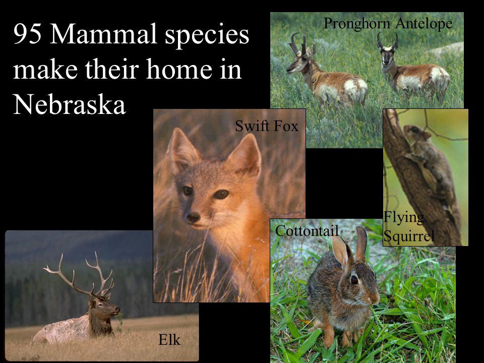 Nebraska's Natural Legacy Project Photos Provided by NEBRASKAland