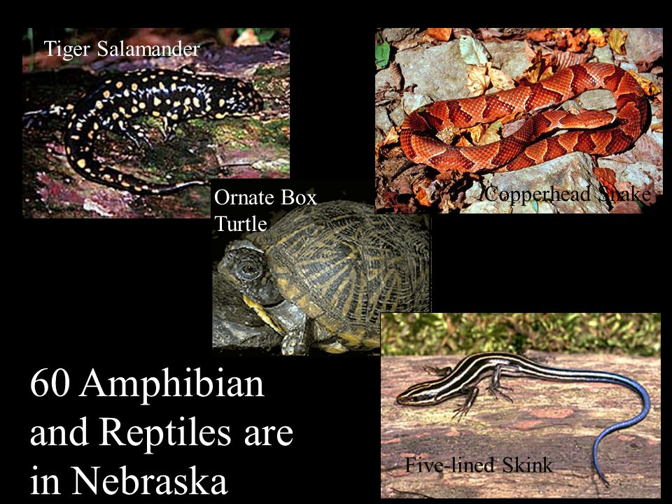 Nebraska's Natural Legacy Project How will this project work.