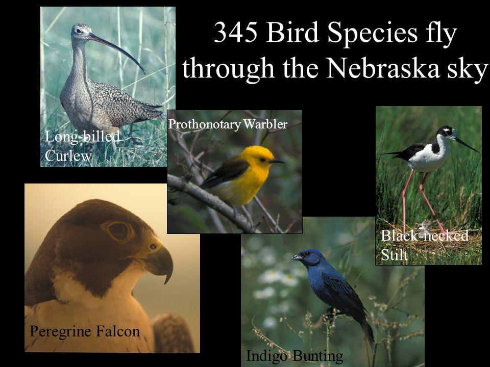 Nebraska's Natural Legacy Project Blowout Penstemon Flower Mix 1470 Plant Species color the landscape Deciduous Trees Sideoats Grama Fremont's clematis
