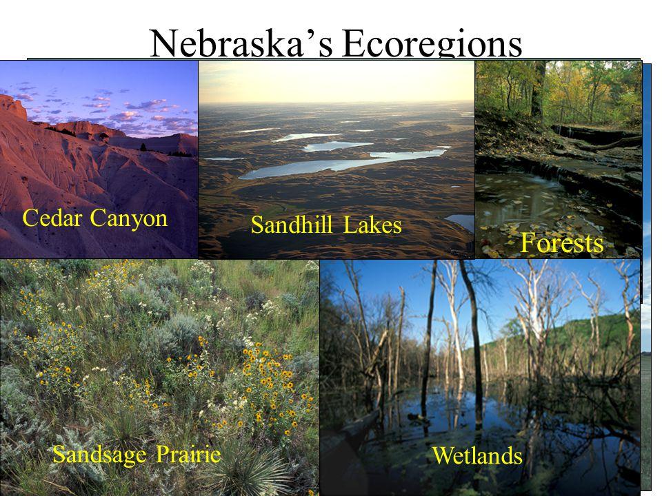 Nebraska's Natural Legacy Project Nebraska is important to North America Sandhill Crane Greater Yellowlegs Mallard