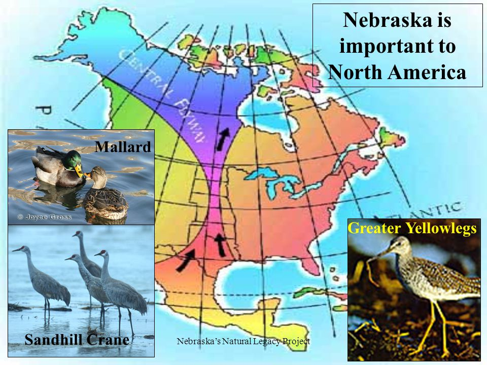 Nebraska's Natural Legacy Project Our natural legacy is important... to everyone