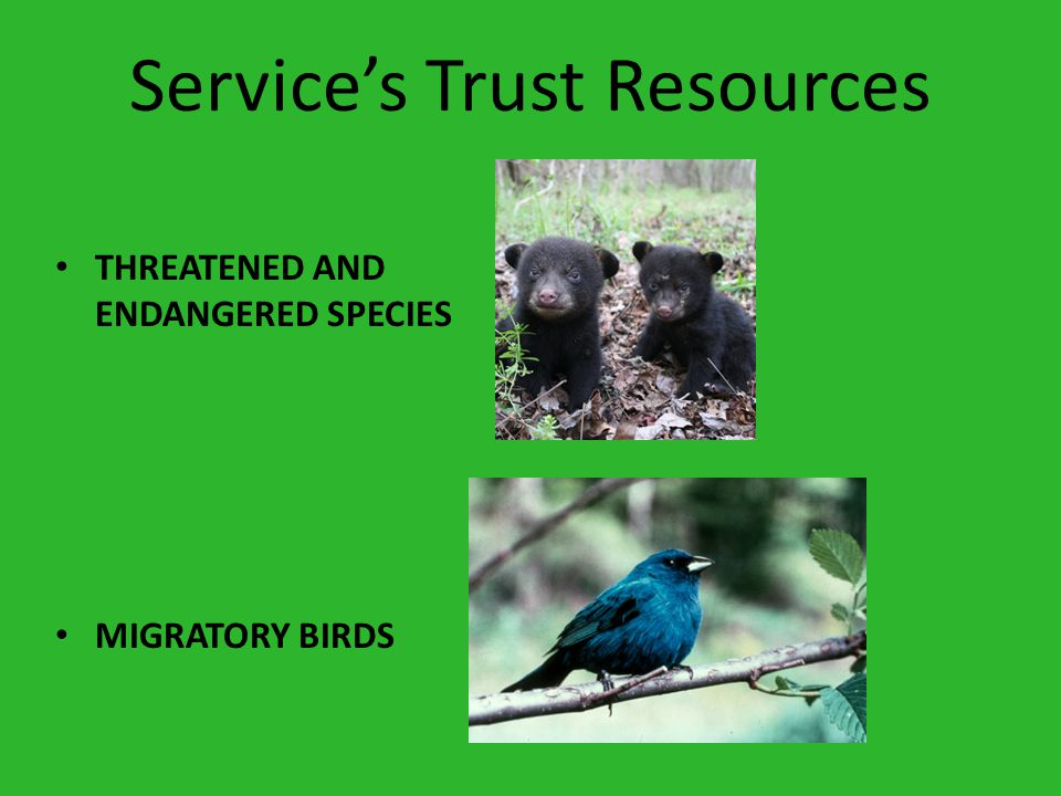 Service's Trust Resources THREATENED AND ENDANGERED SPECIES MIGRATORY BIRDS