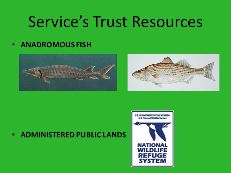 Service's Trust Resources ANADROMOUS FISH ADMINISTERED PUBLIC LANDS