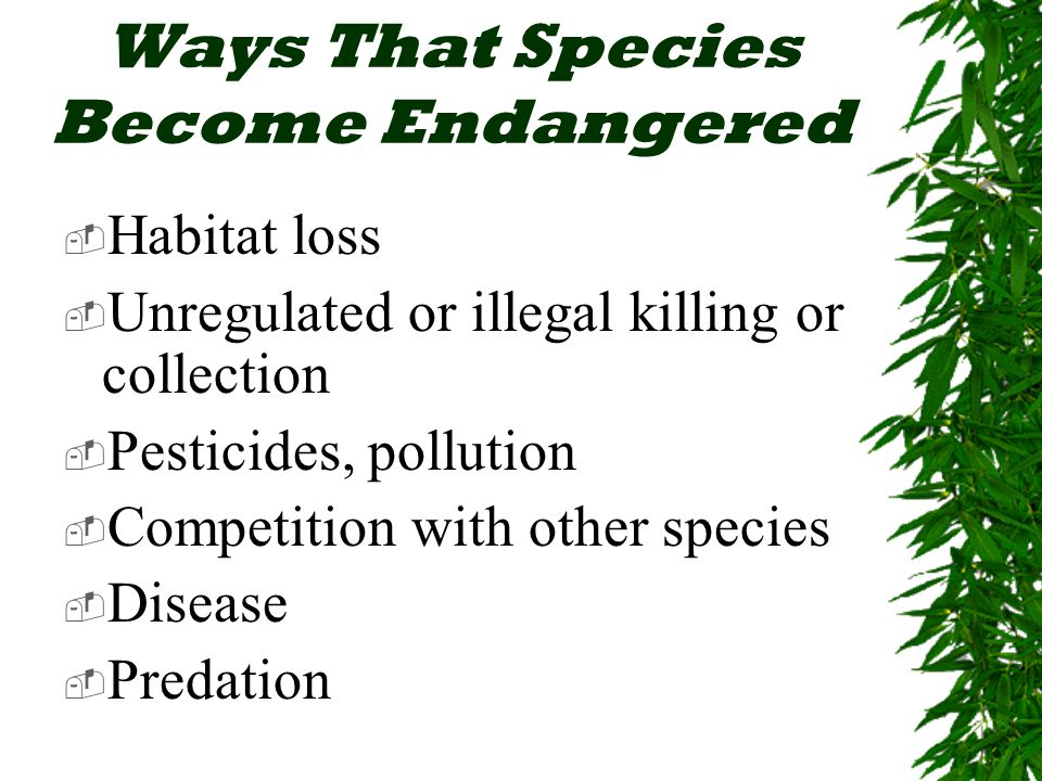 Ways That Species Become Endangered  Habitat loss  Unregulated or illegal killing or collection  Pesticides, pollution  Competition with other species  Disease  Predation