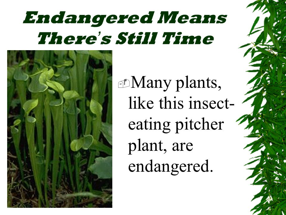 Endangered Means There ' s Still Time  Many plants, like this insect- eating pitcher plant, are endangered.