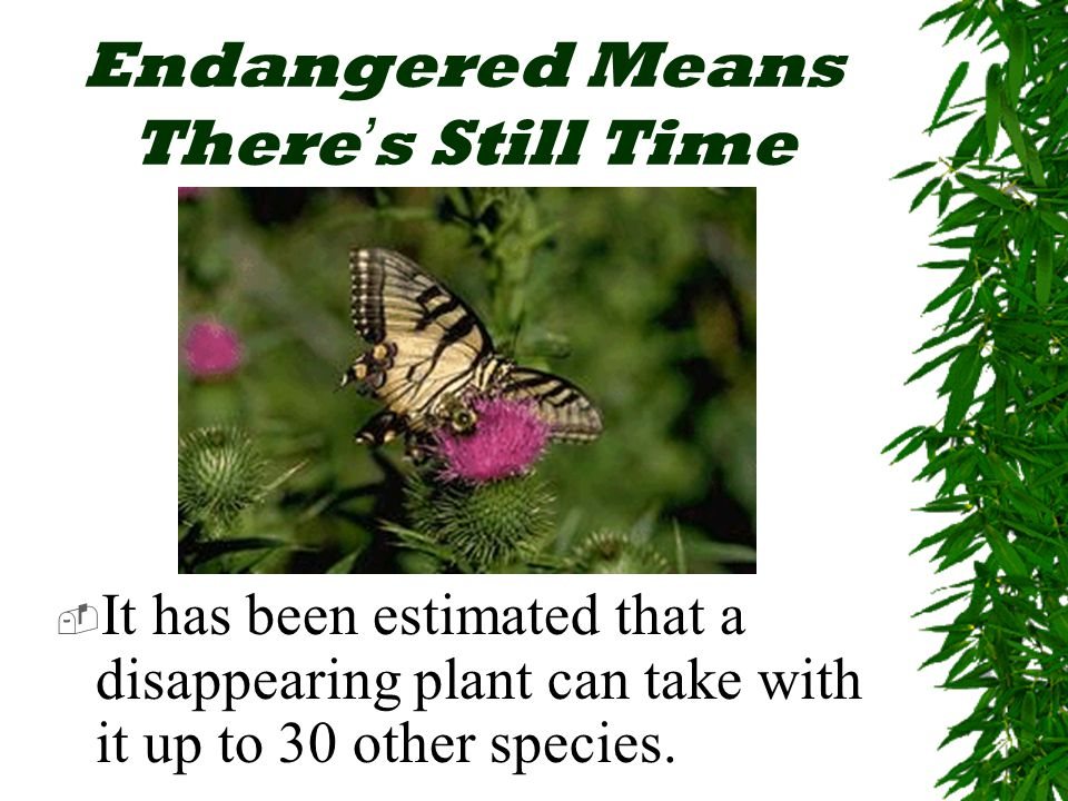 Endangered Means There ' s Still Time  It has been estimated that a disappearing plant can take with it up to 30 other species.