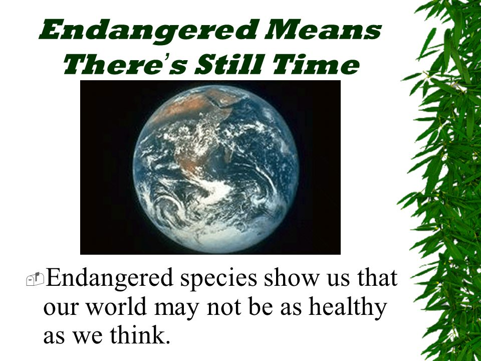 Endangered Means There ' s Still Time  Endangered species show us that our world may not be as healthy as we think.