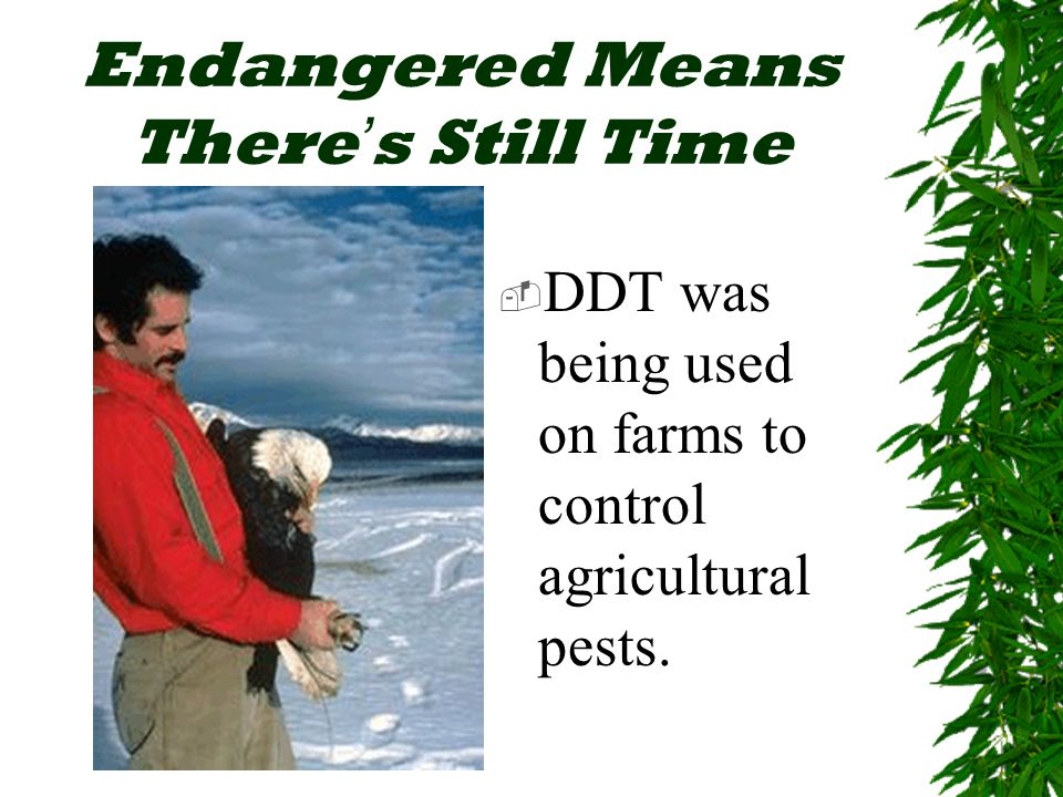 Endangered Means There ' s Still Time  DDT was being used on farms to control agricultural pests.