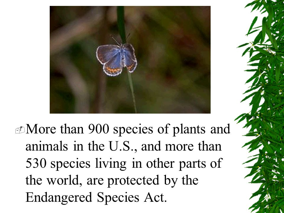  More than 900 species of plants and animals in the U.S., and more than 530 species living in other parts of the world, are protected by the Endangered Species Act.