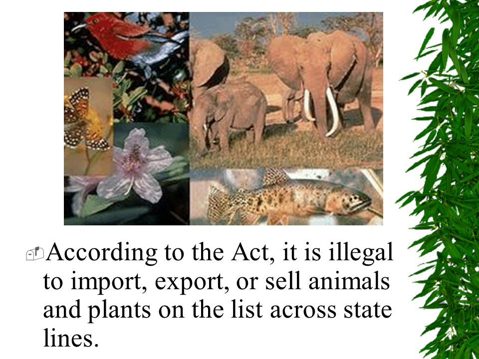  According to the Act, it is illegal to import, export, or sell animals and plants on the list across state lines.