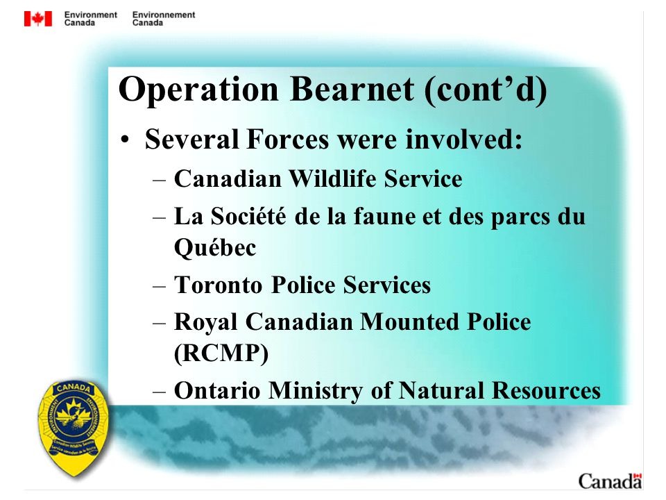 Operation Bearnet (cont'd) Several Forces were involved: –Canadian Wildlife Service –La Société de la faune et des parcs du Québec –Toronto Police Services –Royal Canadian Mounted Police (RCMP) –Ontario Ministry of Natural Resources