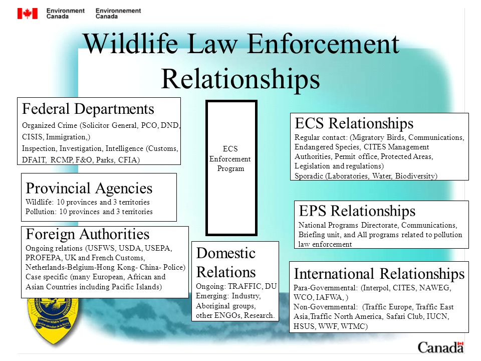 Wildlife Law Enforcement Relationships Federal Departments Organized Crime (Solicitor General, PCO, DND, CISIS, Immigration,) Inspection, Investigation, Intelligence (Customs, DFAIT, RCMP, F&O, Parks, CFIA) Provincial Agencies Wildlife: 10 provinces and 3 territories Pollution: 10 provinces and 3 territories Foreign Authorities Ongoing relations (USFWS, USDA, USEPA, PROFEPA, UK and French Customs, Netherlands-Belgium-Hong Kong- China- Police) Case specific (many European, African and Asian Countries including Pacific Islands) ECS Relationships Regular contact: (Migratory Birds, Communications, Endangered Species, CITES Management Authorities, Permit office, Protected Areas, Legislation and regulations) Sporadic (Laboratories, Water, Biodiversity) EPS Relationships National Programs Directorate, Communications, Briefing unit, and All programs related to pollution law enforcement ECS Enforcement Program International Relationships Para-Governmental: (Interpol, CITES, NAWEG, WCO, IAFWA, ) Non-Governmental: (Traffic Europe, Traffic East Asia,Traffic North America, Safari Club, IUCN, HSUS, WWF, WTMC) Domestic Relations Ongoing: TRAFFIC, DU Emerging: Industry, Aboriginal groups, other ENGOs, Research.