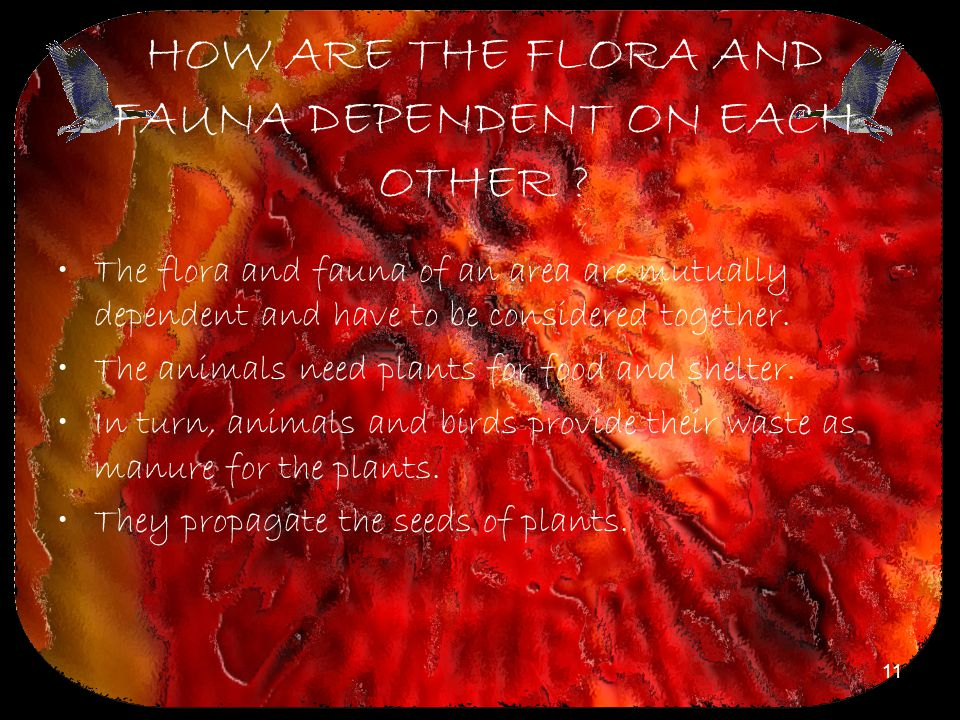 11 HOW ARE THE FLORA AND FAUNA DEPENDENT ON EACH OTHER ? The flora and fauna of an area are mutually dependent and have to be considered together. The