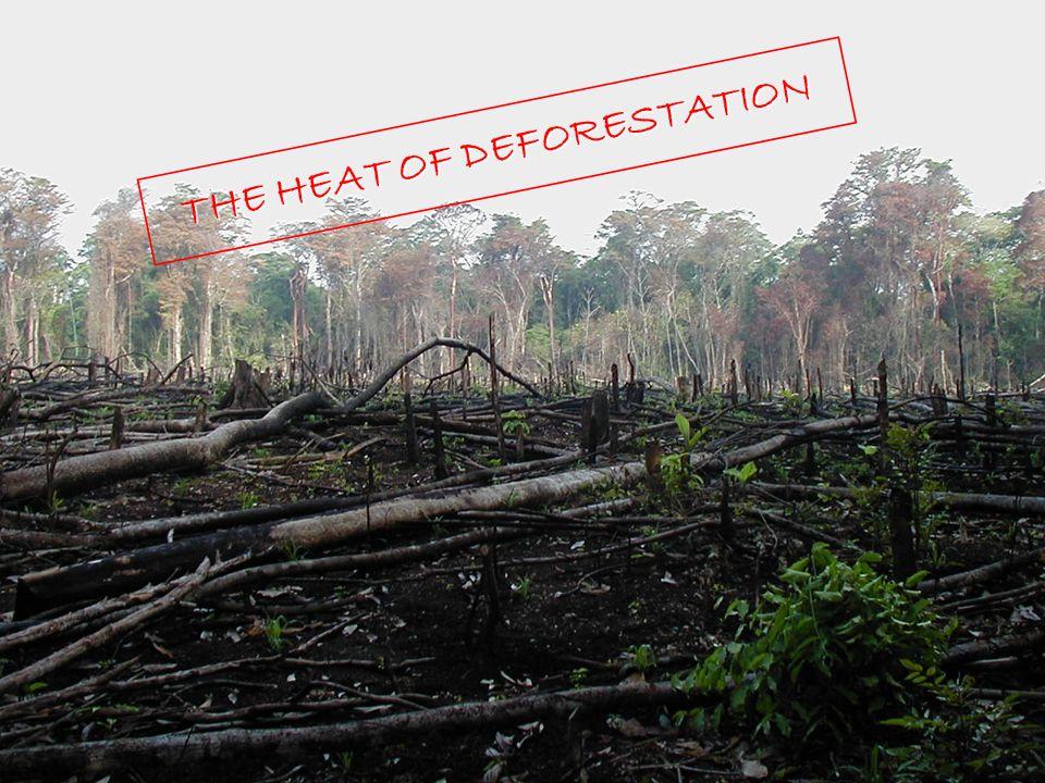 16 THE HEAT OF DEFORESTATION