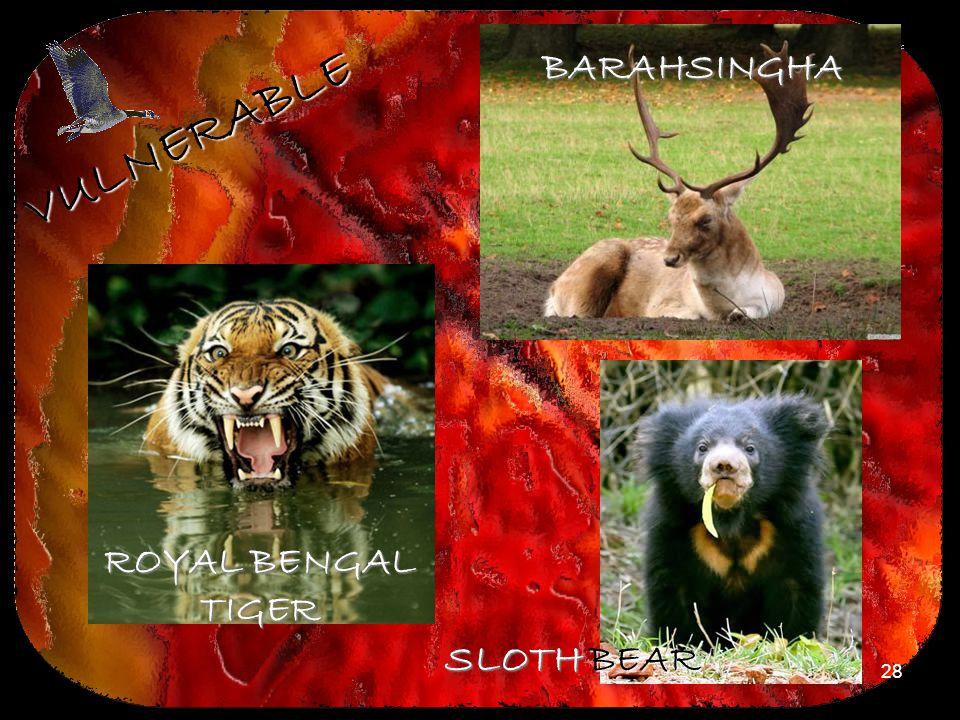 28 VULNERABLE ROYAL BENGAL TIGER BARAHSINGHA SLOTH BEAR