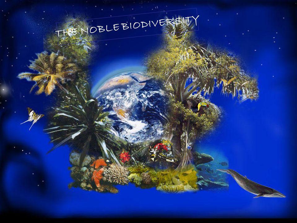 5 TOTAL BIODIVERSITY PLANTS - 287,655 FUNGI - 74,000 – 120,000 LICHEN - 10,000 BIRDS - 10,243 MAMMALS - 5,416 ANIMALS - 1,250,000 FISHES - 29,300 REPTILES - 8,240 AMPHIBIANS - 5,743 2004 approx.