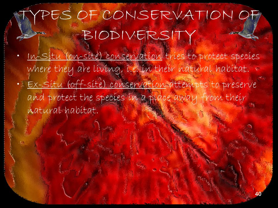 40 TYPES OF CONSERVATION OF BIODIVERSITY In-Situ (on-site) conservation tries to protect species where they are living, i.e. in their natural habitat.