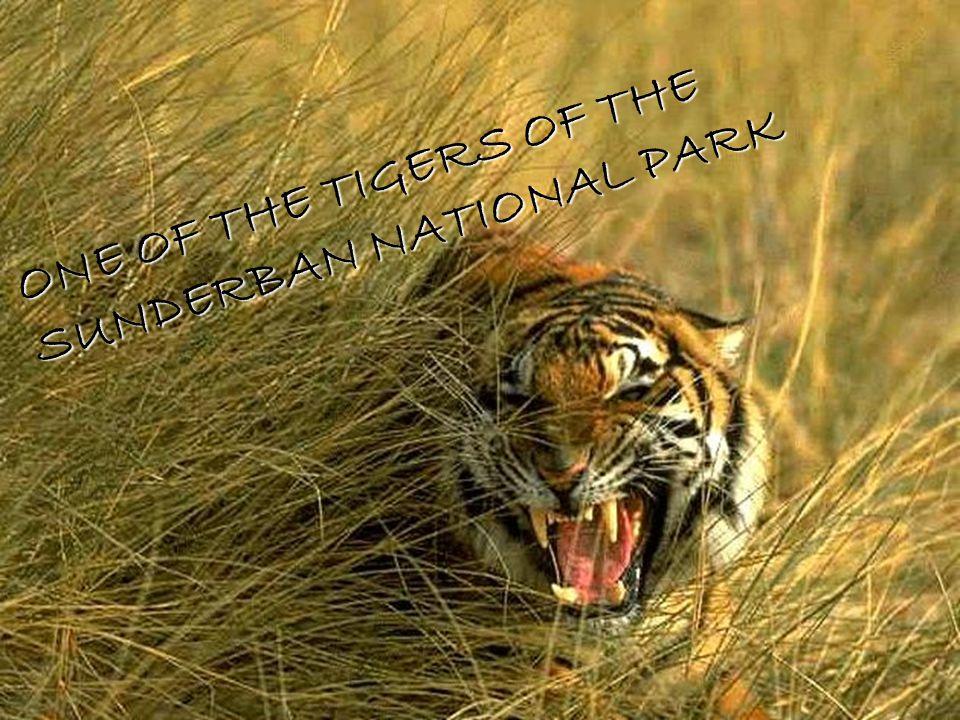 46 THE FAMOUS RHINOS OF THE KAZIRANGA NATIONAL PARK