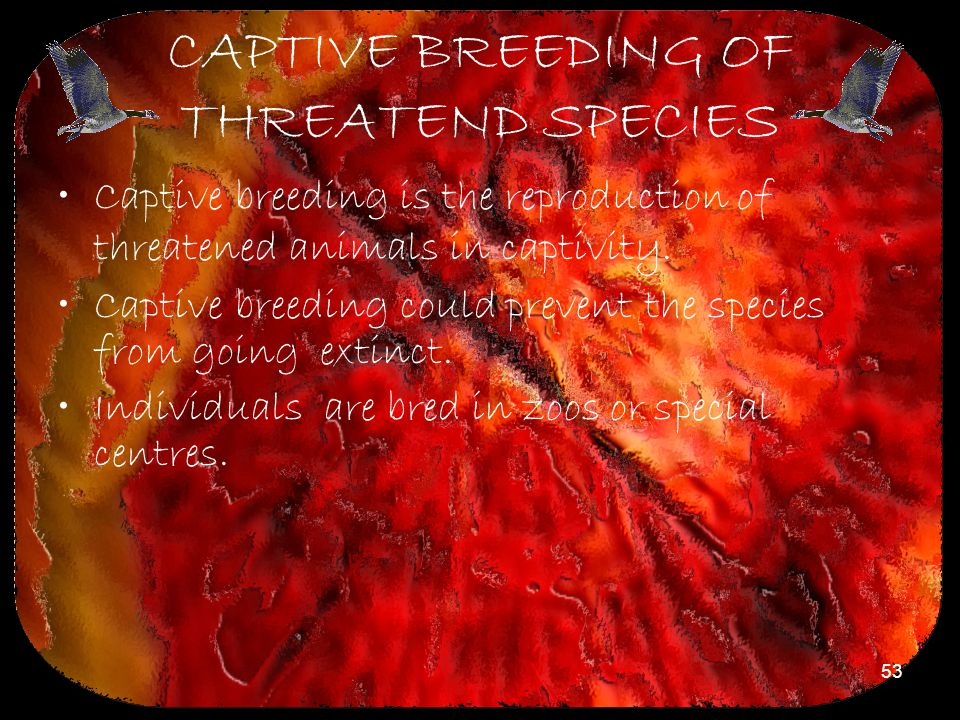 53 CAPTIVE BREEDING OF THREATEND SPECIES Captive breeding is the reproduction of threatened animals in captivity. Captive breeding could prevent the s